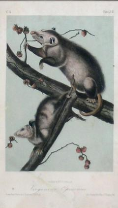 John James Audubon John James Audubon Virginia Opossum 1856 - 1530922