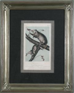 John James Audubon John James Audubon Virginia Opossum 1856 - 1555328