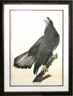 John James Audubon John James Audubon White Headed Eagle Young Bald Eagle 1971 73 - 1542224