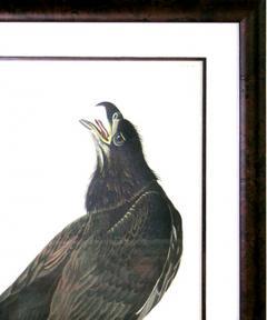 John James Audubon John James Audubon White Headed Eagle Young Bald Eagle 1971 73 - 1555309
