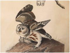 John James Audubon Monumental Framed Audubon Print of The Little Owl 1834 Havell Edition - 602469