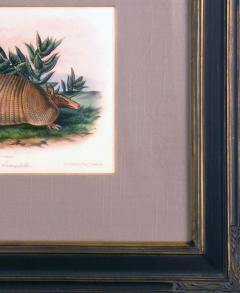 John James Audubon Plate CXLVI Nine Banded Armadillo - 1527726