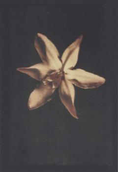 Leendert Blok 1920s botanic autochrome by Dutch photographer Leendert Blok - 1584772