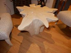 Live Edge Free Edge Bleached Teak Wood Root Coffee Table - 1312007