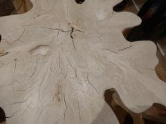 Live Edge Free Edge Bleached Teak Wood Root Coffee Table - 1312012