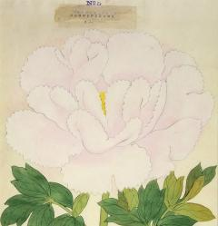 Magnificent Japanese Peony - 2085956