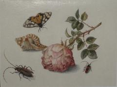 Margareta de Heer Still Life with Rose Insects Butterfly and Conch Shell - 1020377