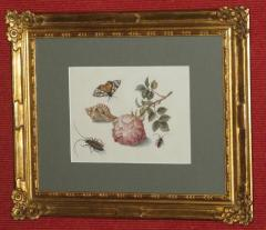 Margareta de Heer Still Life with Rose Insects Butterfly and Conch Shell - 1020378