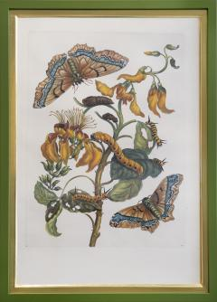 Maria Sibylla Merian MERIAN Maria Sibylla A Group of Six Flowers Insects and Fruits  - 2077347