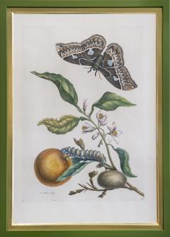Maria Sibylla Merian MERIAN Maria Sibylla A Group of Six Flowers Insects and Fruits  - 2077348