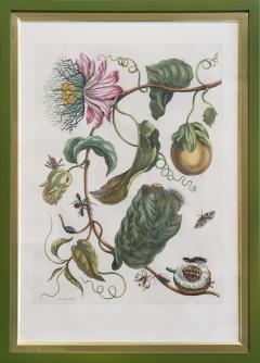 Maria Sibylla Merian MERIAN Maria Sibylla A Group of Six Flowers Insects and Fruits  - 2077349