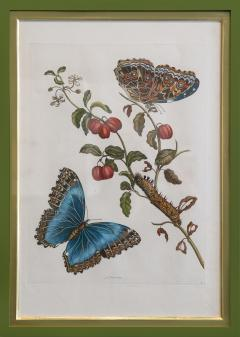 Maria Sibylla Merian MERIAN Maria Sibylla A Group of Six Flowers Insects and Fruits  - 2077351