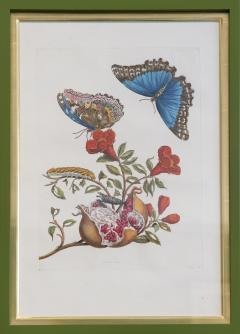 Maria Sibylla Merian MERIAN Maria Sibylla A Group of Six Flowers Insects and Fruits  - 2077352