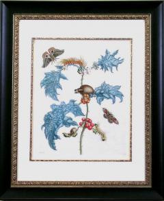 Maria Sibylla Merian Moths with Pupa on Holly - 1577507