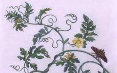 Maria Sibylla Merian Plate 15 Watermelon on the Vine with Arcahia Moth - 1577509