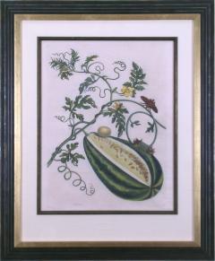 Maria Sibylla Merian Plate 15 Watermelon on the Vine with Arcahia Moth - 1585429