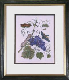 Maria Sibylla Merian Purple Grapes - 1577503