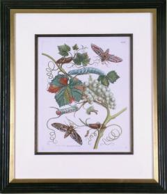 Maria Sibylla Merian White Grapes - 1577504
