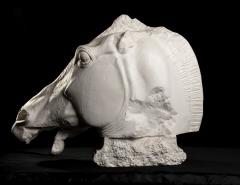 Monumental Cast Sculpture of Horse Head After the Antique at British Museum - 2137072