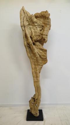 Natural Teak Wood Root Sculpture - 1085726