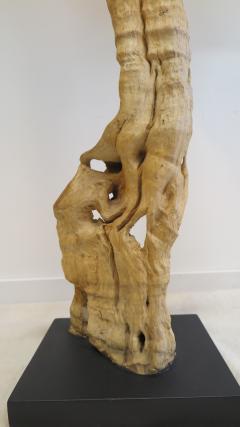 Natural Teak Wood Root Sculpture - 1085727