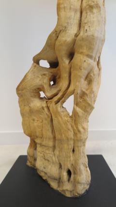 Natural Teak Wood Root Sculpture - 1085728