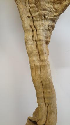 Natural Teak Wood Root Sculpture - 1085729
