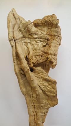 Natural Teak Wood Root Sculpture - 1085730