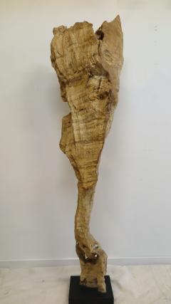 Natural Teak Wood Root Sculpture - 1085732