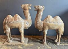 Pair Large Antique Chinese Tang Style Carved Camels - 1439297