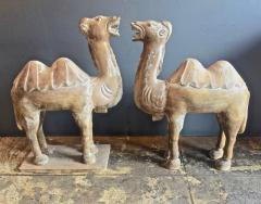 Pair Large Antique Chinese Tang Style Carved Camels - 1439298