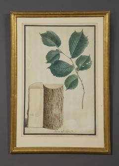 Pair of Botanical Watercolors by Ludwig Pfleger - 1305098