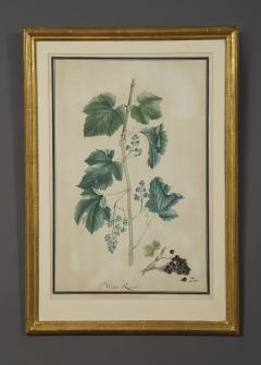 Pair of Botanical Watercolors by Ludwig Pfleger - 1305099