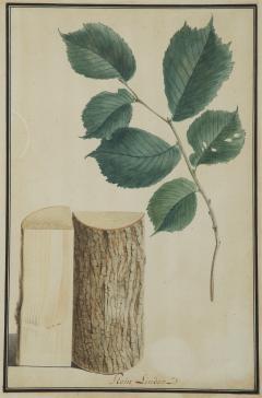 Pair of Botanical Watercolors by Ludwig Pfleger - 1305192