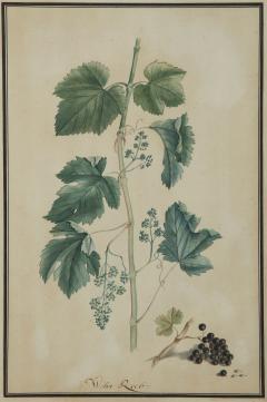 Pair of Botanical Watercolors by Ludwig Pfleger - 1305193