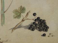 Pair of Botanical Watercolors by Ludwig Pfleger - 1305194