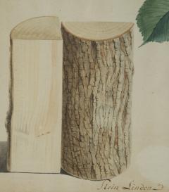 Pair of Botanical Watercolors by Ludwig Pfleger - 1305195