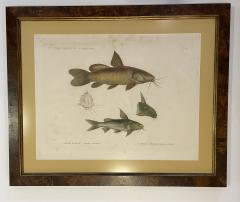 Pair of Framed Zoological Prints Fish of the Nile - 1956519