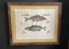 Pair of Framed Zoological Prints Fish of the Nile - 1956523