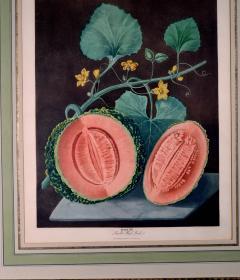 Pair of George Brookshaw Engravings of Melons  - 1917233