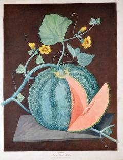 Pair of George Brookshaw Engravings of Melons  - 1917239