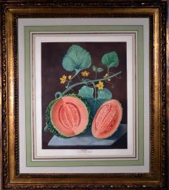 Pair of George Brookshaw Engravings of Melons  - 1917242