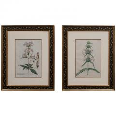 Pair of Hand Colored Botanical Engravings of Lilies - 1205243
