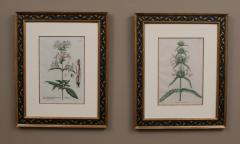 Pair of Hand Colored Botanical Engravings of Lilies - 1205245