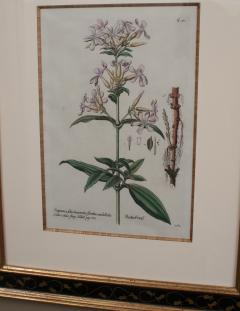 Pair of Hand Colored Botanical Engravings of Lilies - 1205247