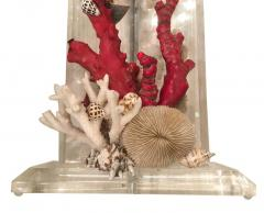 Pair of Lucite Lamps with Coral and Sea Shells - 658911