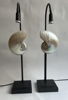 Pair of Nautilus Shell Table Lamps - 2090232