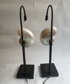 Pair of Nautilus Shell Table Lamps - 2090238