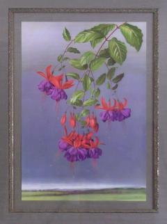 Paul Jones Fuschia Peruvian Fuschia or Berrybush 1971 - 1559009