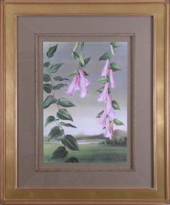Paul Jones Lapageria Rosea Chilean Bellflower 1971 - 1559029